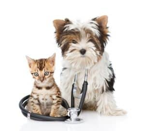 Preventative Care-Woodstock Veterinary Hospital