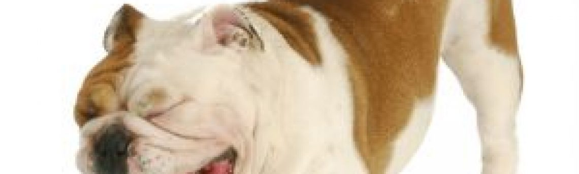 """What we need to know about the real """"Kennel Cough"""""""