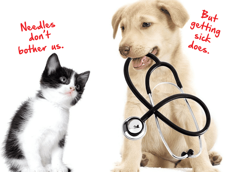 Reduced Cost Vaccine Clinic-Woodstock Veterinary Hospital